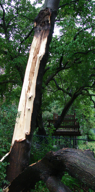 My neighbours tree broke off a huge branch during a wind storm, Toronto, Canada